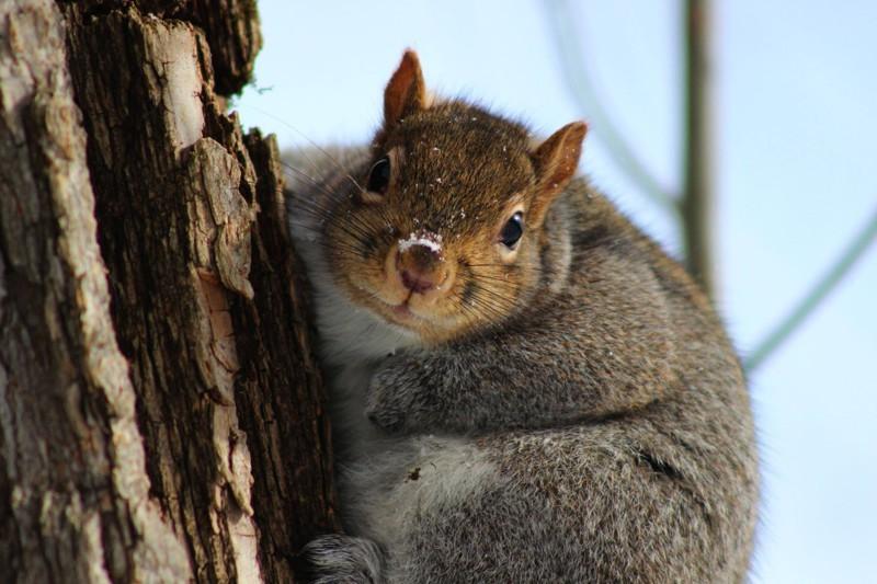 Что смотришь? Орехи тащи. животные, милахи, пухляки, толстяки