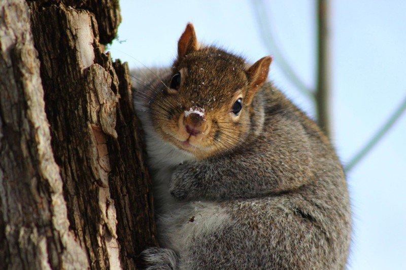 20 животных, которые остаются милыми даже не смотря на свой лишний вес животные, милахи, пухляки, толстяки