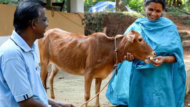 3. Самая маленькая корова животные, интересное, самые маленькие животные