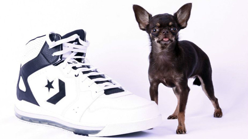 2. Самая маленькая собака. животные, интересное, самые маленькие животные