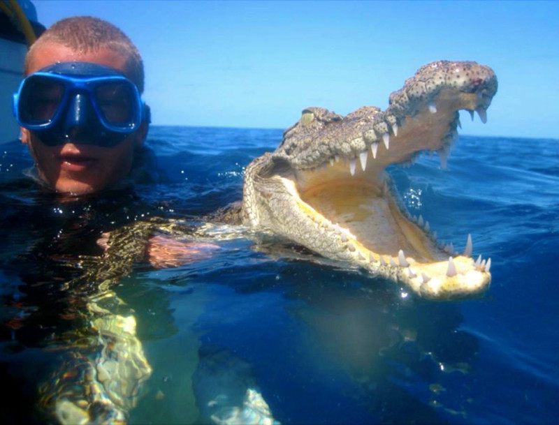 Некоторые смельчаки даже отваживаются сделать селфи с крокодилами. идиоты, прикол, селфи, юмор