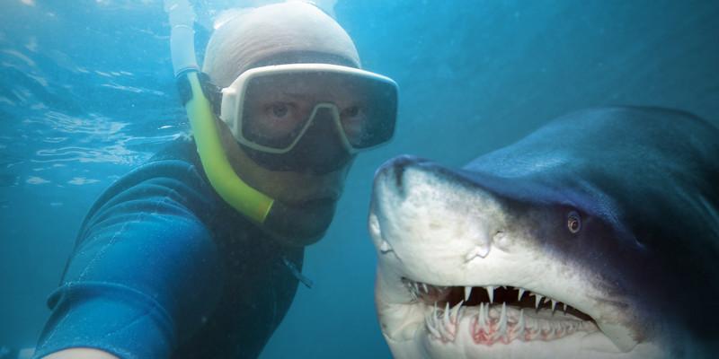 Ещё более опасны селфи с акулами. В отличие от львов или медведей, эти — совсем не поддаются дрессировке. идиоты, прикол, селфи, юмор