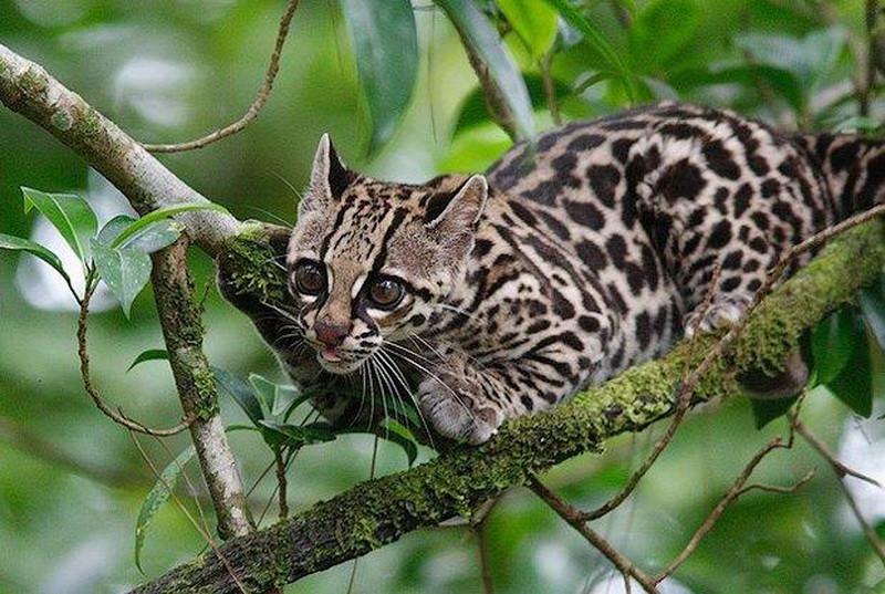 Сумасшедшие фотографии животных, которые точно вас удивят10 недавно открытых видов животных