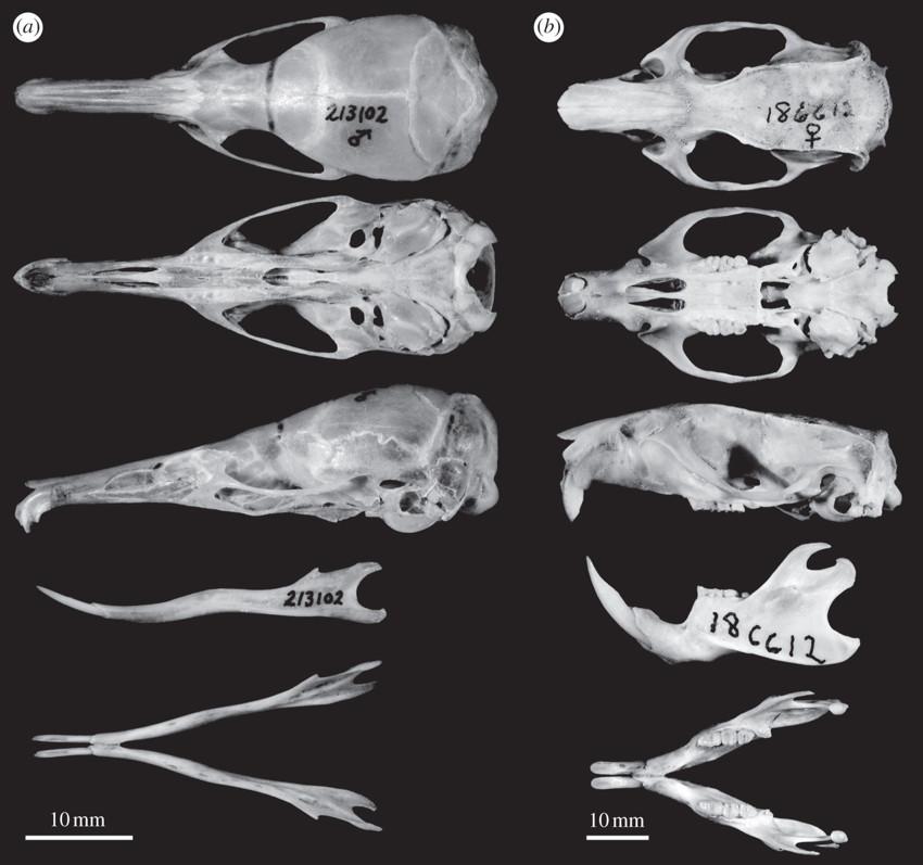 10 недавно открытых видов животных зоология, новые животные, открытия