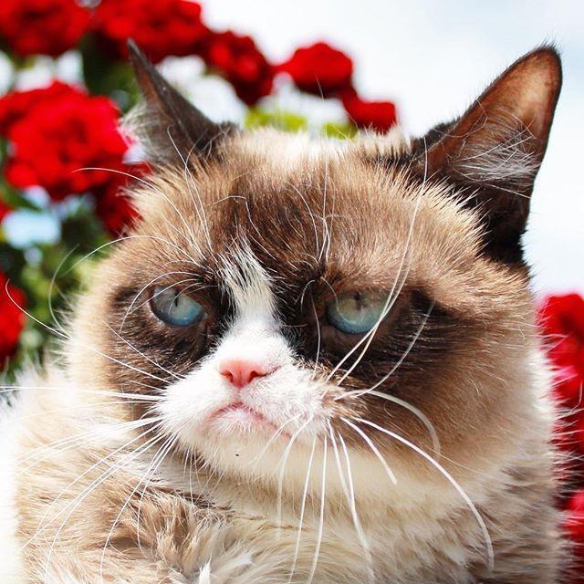 10 животных, которые популярнее, чем звёзды шоу-бизнеса животные, звёзды, интернет, коты, юмор