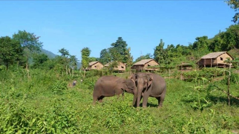 Слон, который провел 30 лет в зоопарке, наконец-то оказался на свободе животные, пакистан, слон