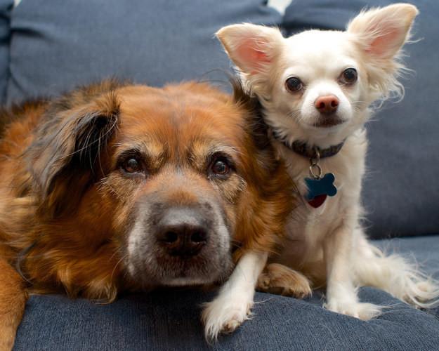 13. Эти приятели, обнявшиеся для совместного фото животные, милота, собаки