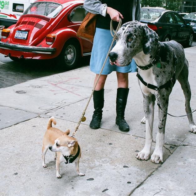 14. И эти дружки, использующие свои навыки моделей животные, милота, собаки