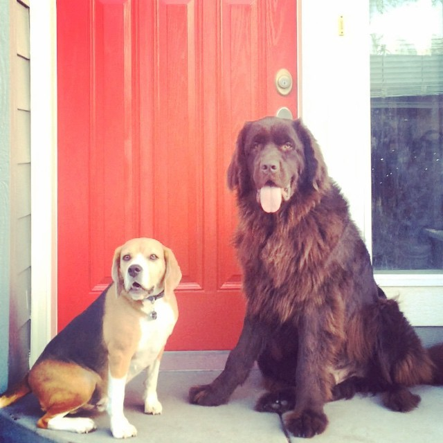 21. И эти двое, которые согласны ждать, если ждать в компании! животные, милота, собаки