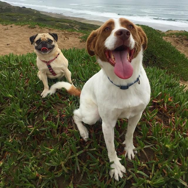 28. И, наконец, эти двое, которые знают, что каждый день - приключение, когда друг рядом! животные, милота, собаки