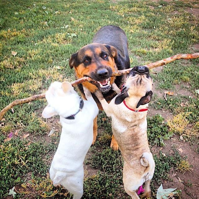9. Эта собака, забавно поддразнивающая своих маленьких друзей животные, милота, собаки