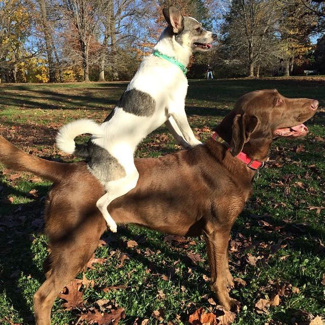 7. Этот пёс, который не прочь прокатить друга животные, милота, собаки