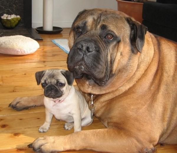8. И эти друзья, больше похожие на братьев животные, милота, собаки