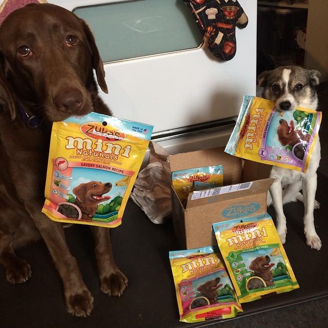 3. Эти двое, которые знают, как получить вкусненькое животные, милота, собаки