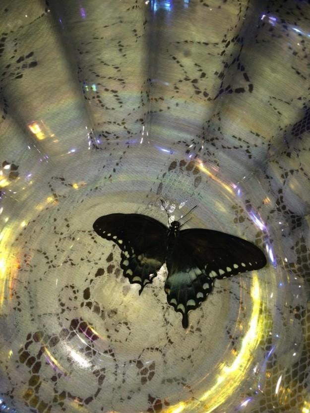 И в воскресенье из куколки наконец вылупилась бабочка! бабочка, гусеница, животные