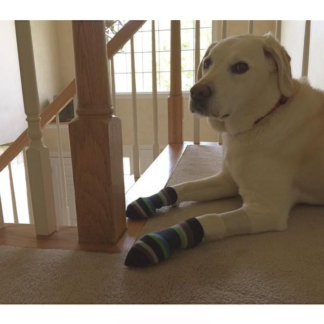 """17. """"Эти носки... Ты что, серьёзно?!"""" животные, милота, собаки, юмор"""