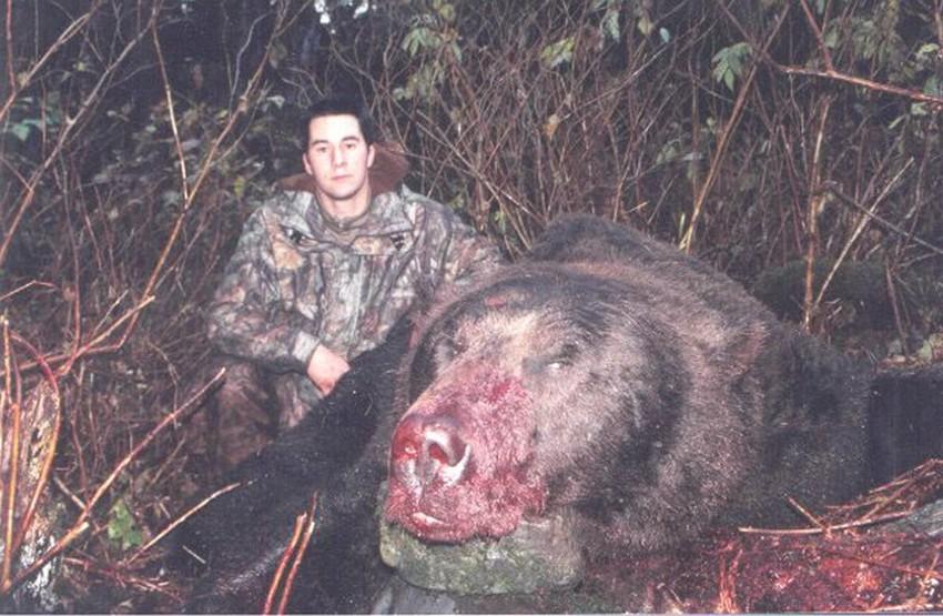 Самый большой медведь. животные, рекорды, самые большие животные