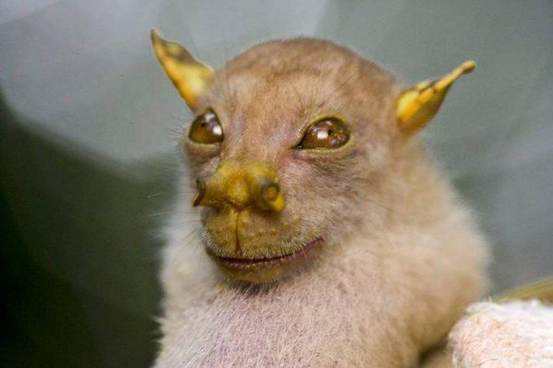 Сумасшедшие фотографии животных, которые точно вас удивят животные, интересное, удивительное, фото