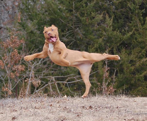 От йоги душа поет, а тело летает! животные, йога, милота, прикол, фото