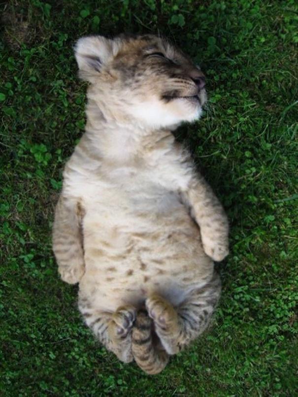 Учимся расслабляться животные, йога, милота, прикол, фото