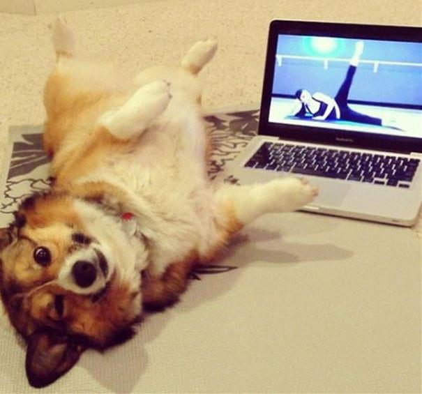 Видеоурок животные, йога, милота, прикол, фото
