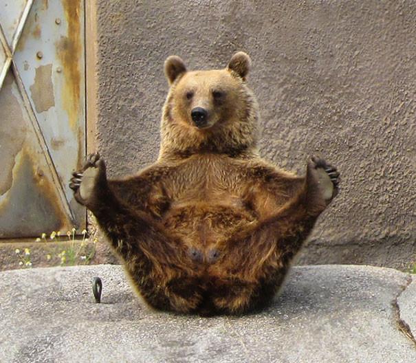 Мишка, познавший дзен животные, йога, милота, прикол, фото