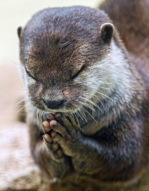 Урок начинается с приветствия животные, йога, милота, прикол, фото
