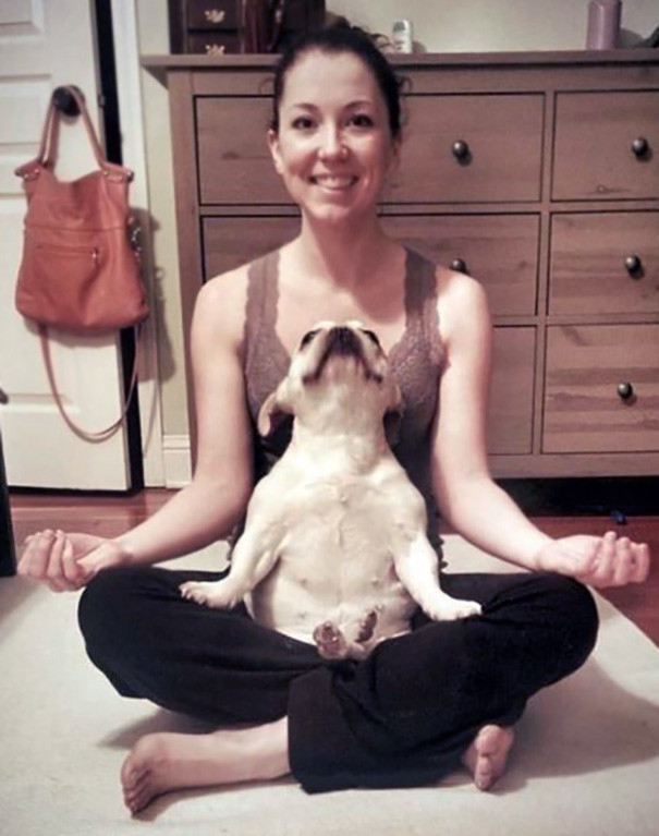 Омммм... животные, йога, милота, прикол, фото