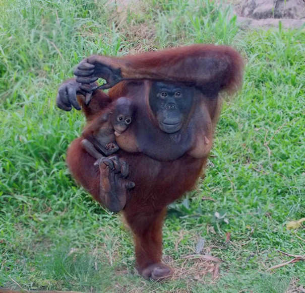 Семейная тренировка животные, йога, милота, прикол, фото
