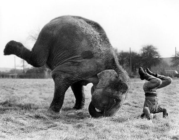 Смотри и учись, мелочь пузатая! животные, йога, милота, прикол, фото