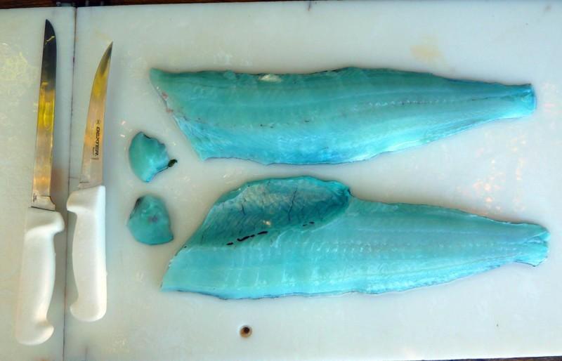 У этой рыбы реально синее мясо. животные, интересное, удивительное, фото