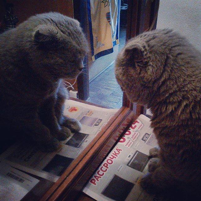Минутка самопознания. коты, прикол, юмор