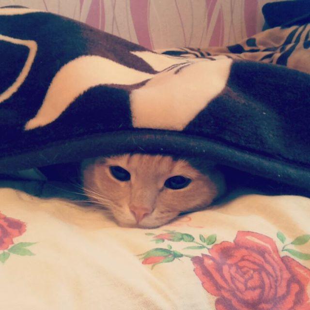 Даже уютная постелька уже не радует. коты, прикол, юмор