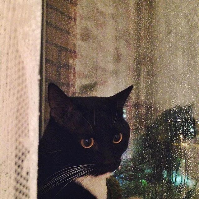 Он просто любил сидеть на подоконнике, пить молочко и слушать дождь… коты, прикол, юмор