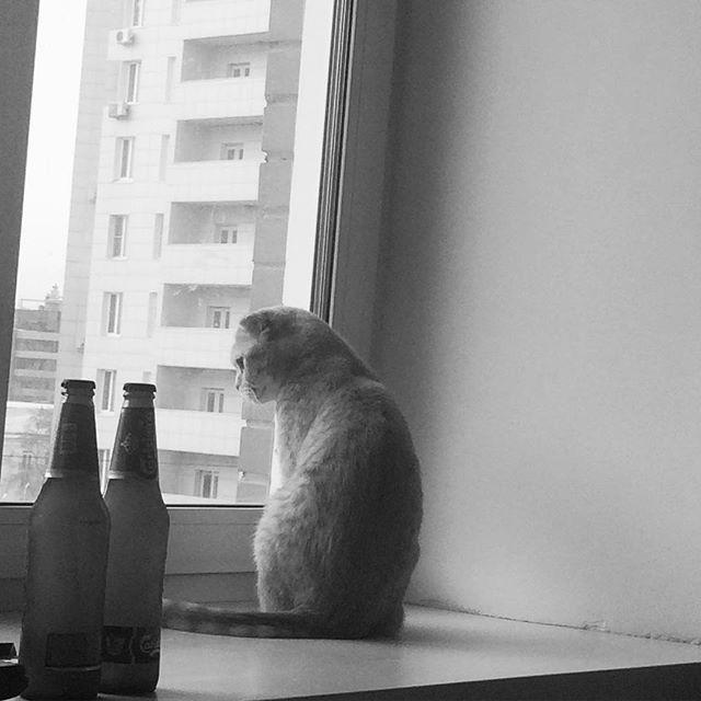 А за окном — унылый серый город. коты, прикол, юмор