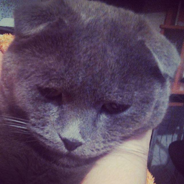 Грустный, грустный котейка. коты, прикол, юмор