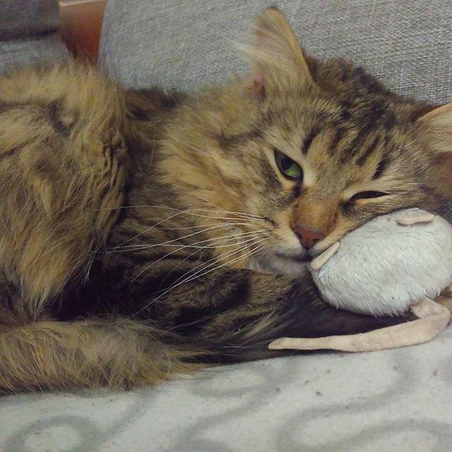 Поймал мышку и понял, что всё это бессмысленная суета. коты, прикол, юмор