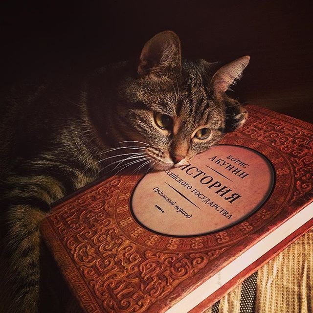 Интересно, какая веха в нашей истории могла заставить котейку так грустить? коты, прикол, юмор