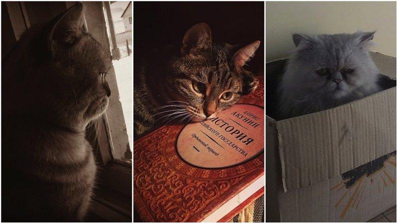 25 котиков, которые внезапно приуныли коты, прикол, юмор