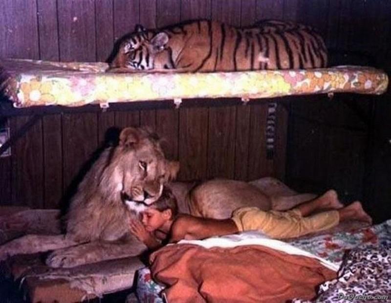 Многие спят со своими хозяевами в одной постели дикие кошки, кошки, прикол, юмор