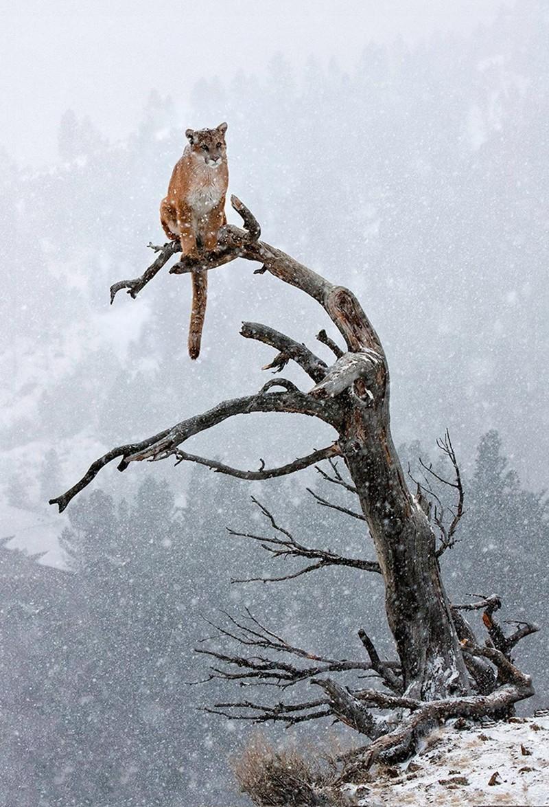 А ещё кошки хорошо лазят по деревьям дикие кошки, кошки, прикол, юмор