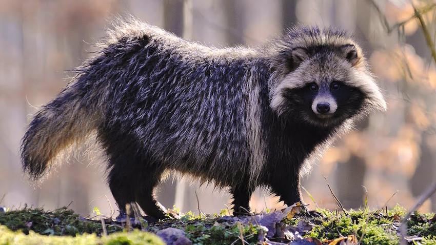 3. Енотовидная собака. животные, неизвестные животные, природа
