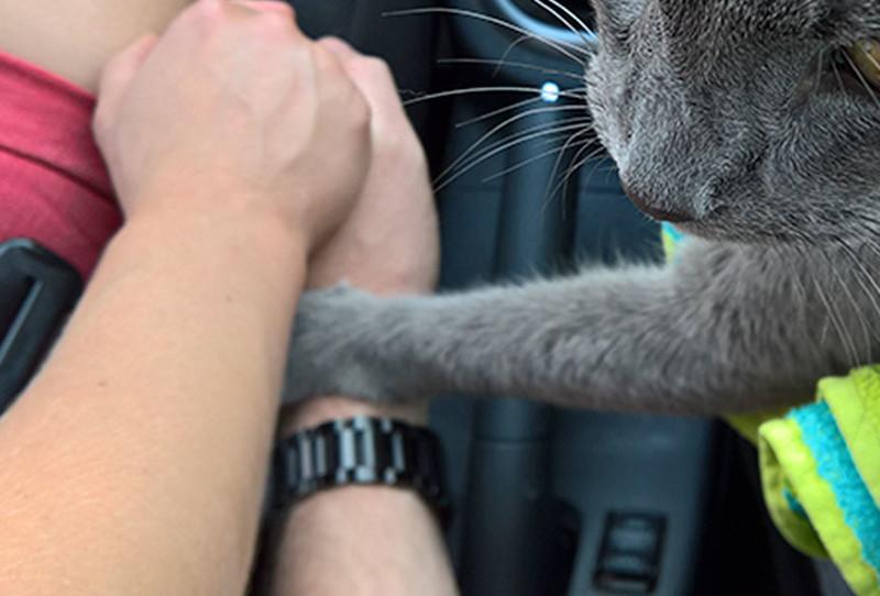 Умирающий кот держал своих владельцев за руку, когда его везли усыплять животные, истории, кошки, трогательно