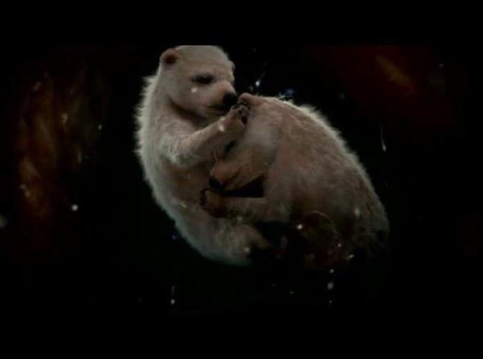 Белые медвежата детеныши, животные, фото