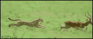 животные, интересное, природа, суперспособности