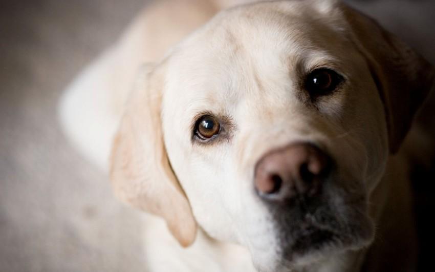 Собака (1,2) животные, интеллект, разум