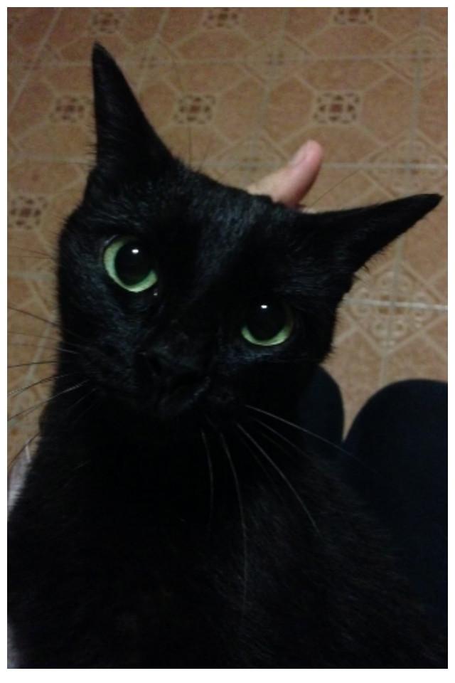 15. И последний Беззубик - он убежден, что родился только с одной миссией: быть вашим другом драконология, драконы, коты, кто дайджест, черный кот