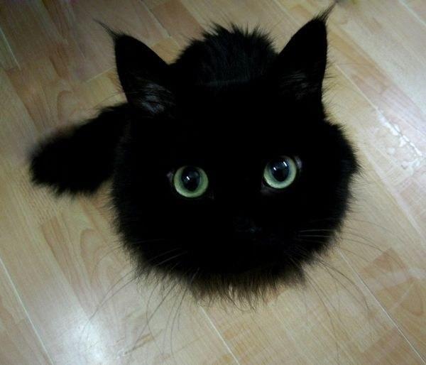 1. Узнаете? Эти глаза ни с кем не перепутать драконология, драконы, коты, кто дайджест, черный кот