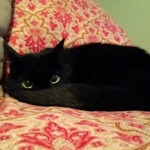 2. А этот дракончик маскируется хвостом драконология, драконы, коты, кто дайджест, черный кот