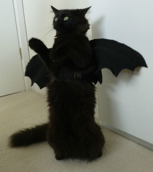 6. А вот у этого создания крылья уже огромные...к полетам готов! Рулить будет хвостом. драконология, драконы, коты, кто дайджест, черный кот